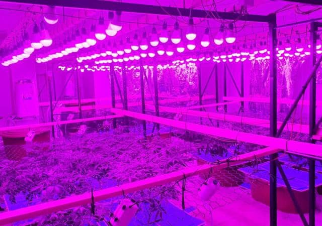 A picture of A photograph of a confiscated marijuana grow-op | Seoul Metropolitan Police Agency